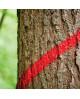 Forstmarkierspray mit ergonomischer Sicherheitskappe, Distein, 500ml